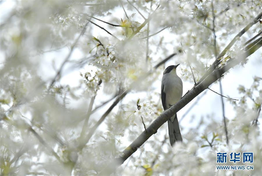 #(环境)(3)鸟儿戏春