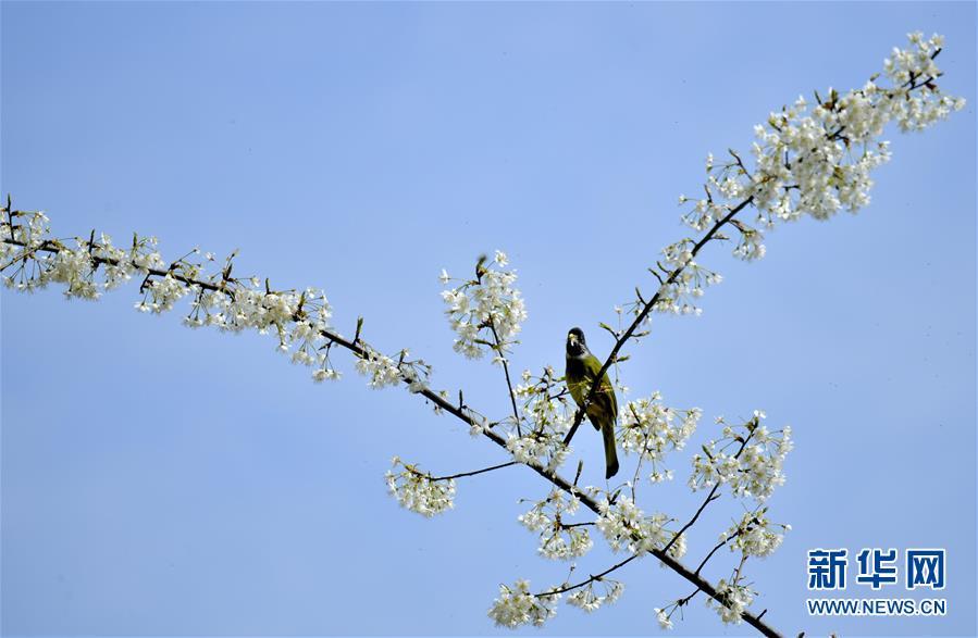 #(环境)(4)鸟儿戏春