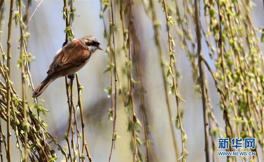 #(环境)(5)鸟儿戏春