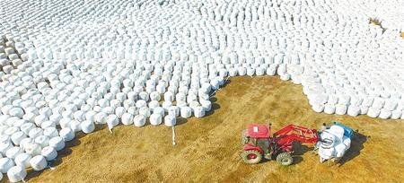 """让群众在产业链上增收 ——临夏州以""""粮改饲""""助推农牧产业协同发展纪实"""