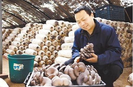 拓宽特色增收路——庆阳西峰区农业产业发展侧记(图)