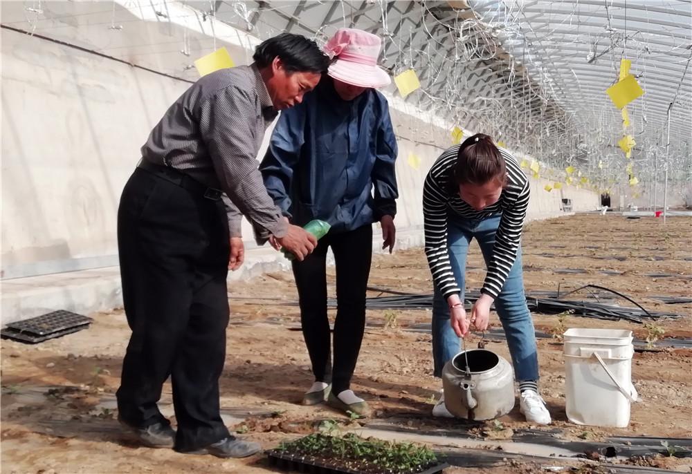 发展高效设施农业——玉门市柳湖镇为贫困户找到脱贫致富突破口(图)
