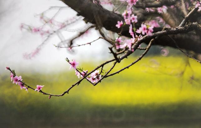 春分 谐和阴阳身材安