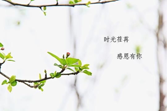 春风十里,致最美的你(图)