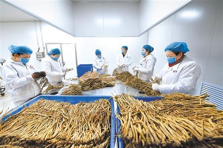 抱团谋发展 市场更广阔——甘谷华夏邦农农民合作社联合社见闻