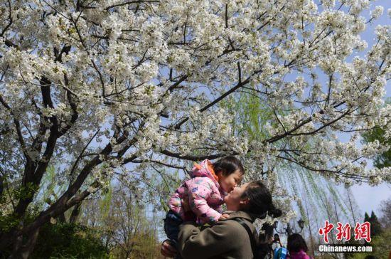 济南五龙潭樱花节