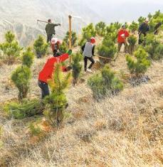 庆阳宁县组织群众在春荣镇董家村和焦村镇樊浩村植树