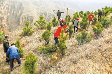 庆阳宁县组织群众植树(图)