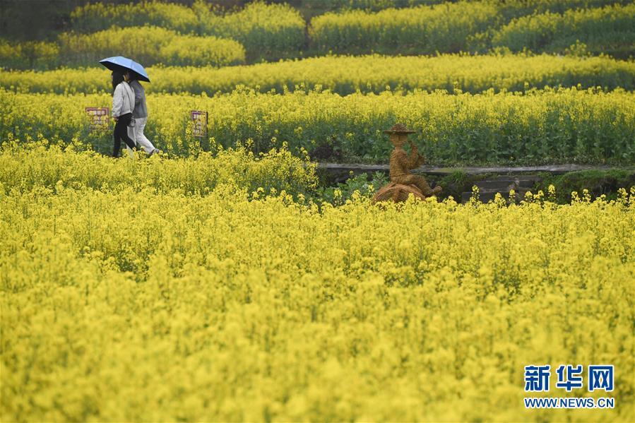 (春季美丽生态)(2)安徽黟县:油菜花开景如画