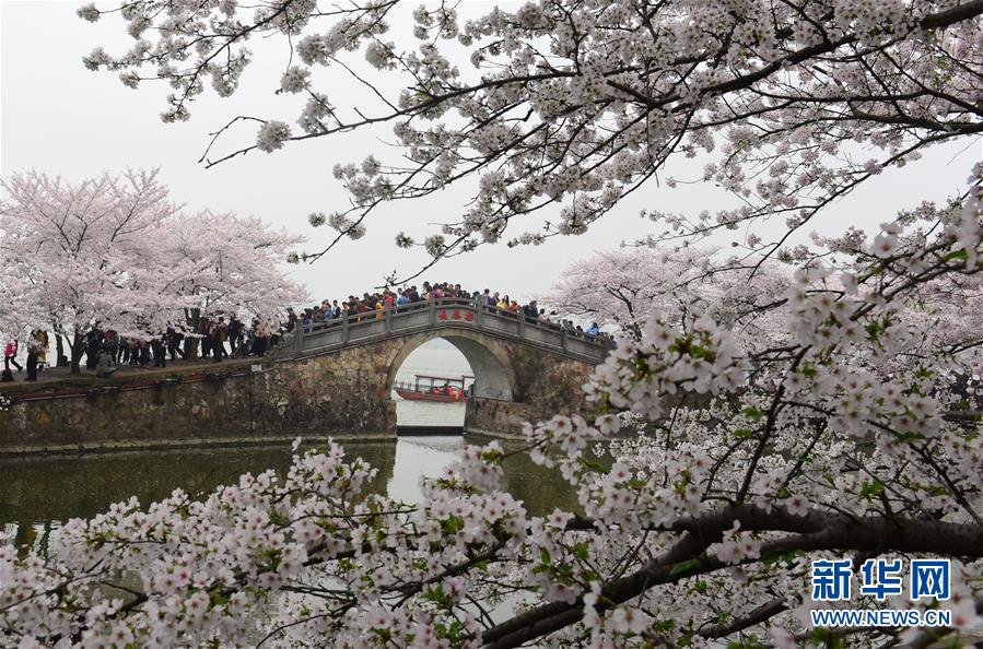 #(新华视界)(1)江苏无锡:赏樱正当时