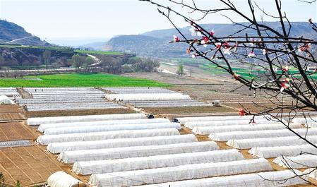 黄土地上产业兴 ——庆阳西峰区加快农业产业发展侧记