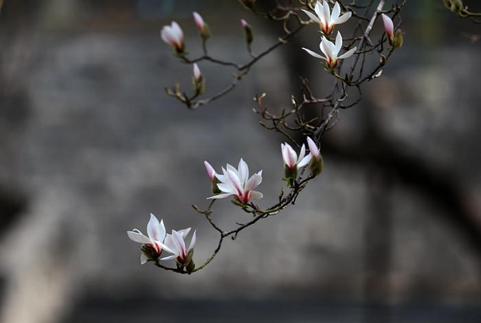 寻芳兰州|一树花开最知春 兰山花海半山红(组图)