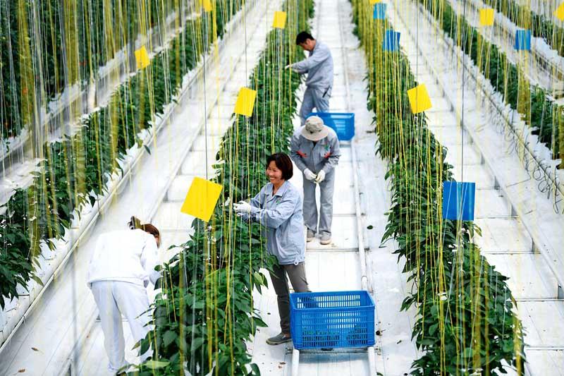 安徽:春日忙农事