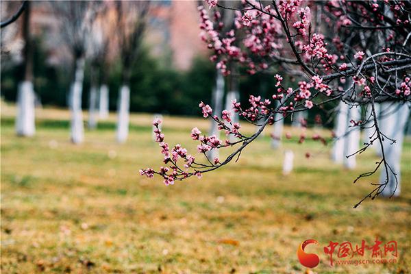 寻芳兰州|兰理工:人间四月天 校园春意浓(组图)