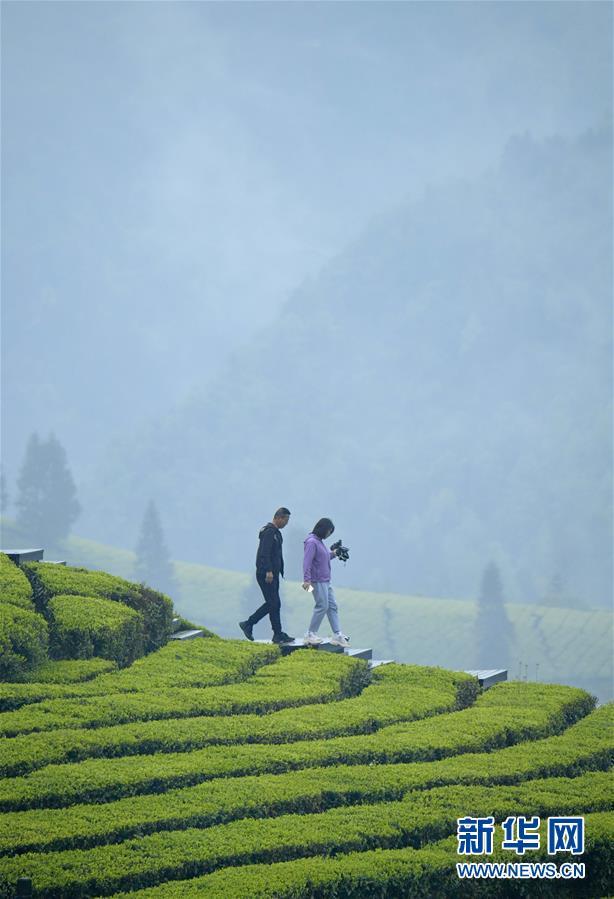 #(社会)(1)雨中漫步春茶园