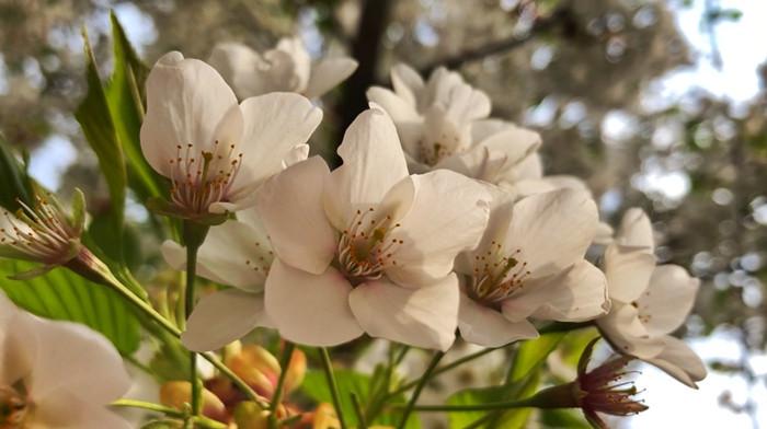 寻芳兰州|最美人间四月天 乐享好春光(二)