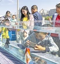 兰州举办金鱼科普展览