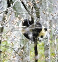 甘肃白水江自然保护区 5天4夜,寻猫记