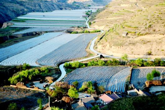 定西:发展合作社 助农奔富路