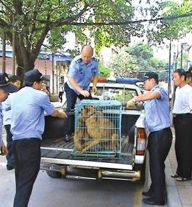 兰州住建局开展集中整治小区违规违法养犬行动