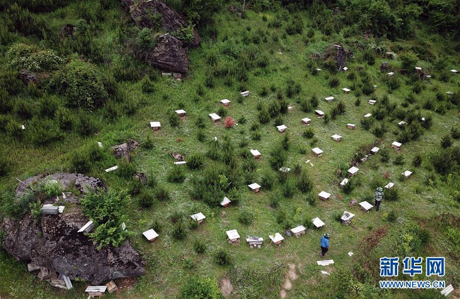 陇南徽县:大山深处养蜂忙