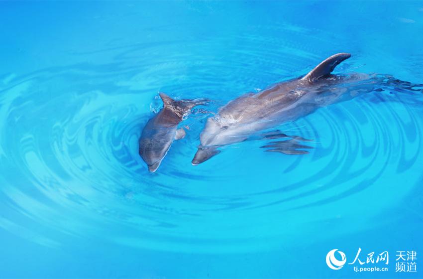 """""""九贝""""和妈妈Sanba在水中嬉戏。"""