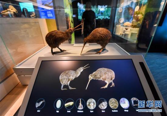 新西兰国家博物馆自然馆重新开放