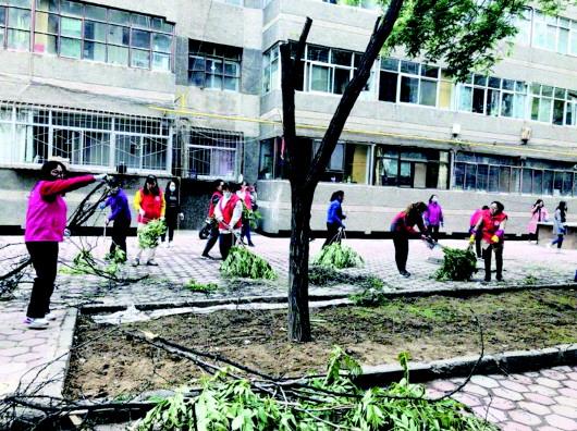 白银:大树危及居民安全 社区牵头修剪树木