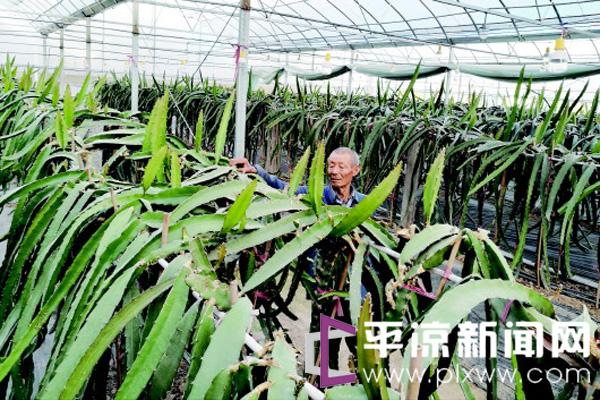 """平凉崇信:为现代农业装上""""科技引擎"""""""
