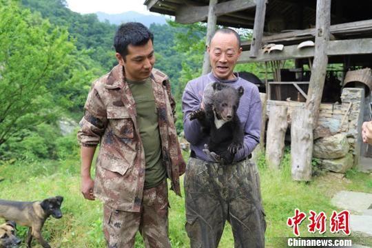 甘肃自然保护区生态趋好 黑熊幼崽误入茶地被救助