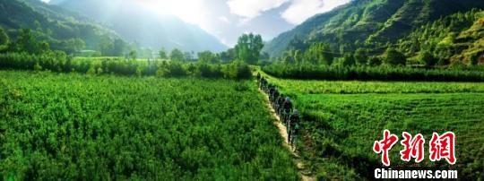 甘肃陇南市徽县境内气候温暖湿润,丘陵、盆地相间。近年来发展苗木产业,大幅带动农民脱贫致富。(资料图) 张承荣 摄