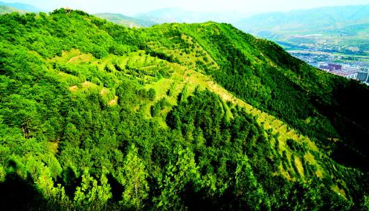 定西漳县:退耕还林打造美丽家园