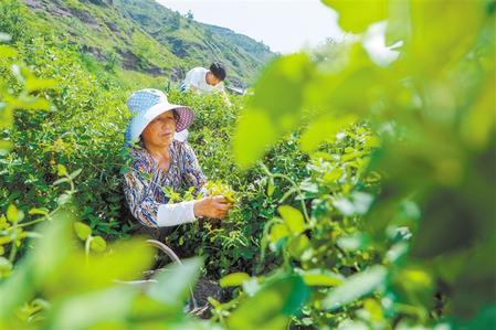 """从""""有没有""""到""""好不好"""" ——庆阳市农民专业合作社规范提升工作侧记"""