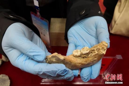 中国科学院院士陈发虎带领的兰州大学环境考古团队近日在一次会议上最新公布,夏河丹尼索瓦人发现地——甘肃省甘南州夏河县白石崖溶洞保存有丰富的旧石器文化遗存,包括大量石器和动物骨骼化石。