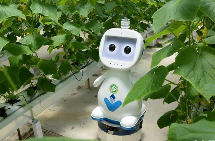 """迈向""""无人农场""""——福建发布人工智能农业机器人"""