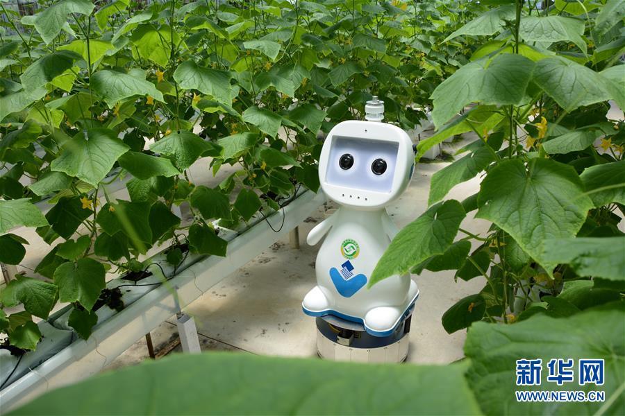 """(图文互动)(3)迈向""""无人农场""""——福建发布人工智能农业机器人"""