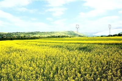 临夏州尹集镇推行龙头企业+合作社+贫困户油菜种植模式