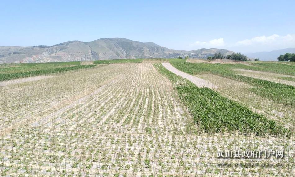 武山县2019年度乡村振兴农业示范点建设有序推进