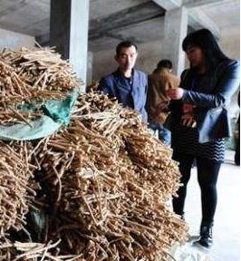 千年药乡化茧成蝶 ——陇西县中医药产业实现全链条快速发展纪实