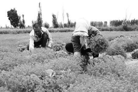 """岷县:农产品搭上电商""""快车"""""""