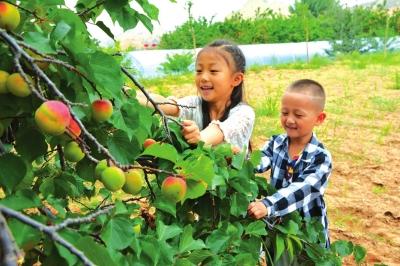 兰州皋兰县举办乡村旅游免费采摘节
