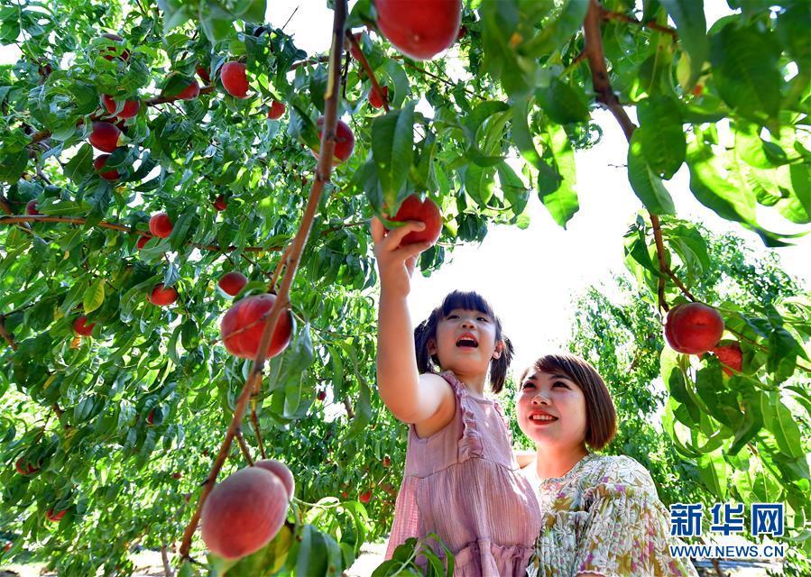 (经济)(3)河北滦州:荒山变身富农生态园