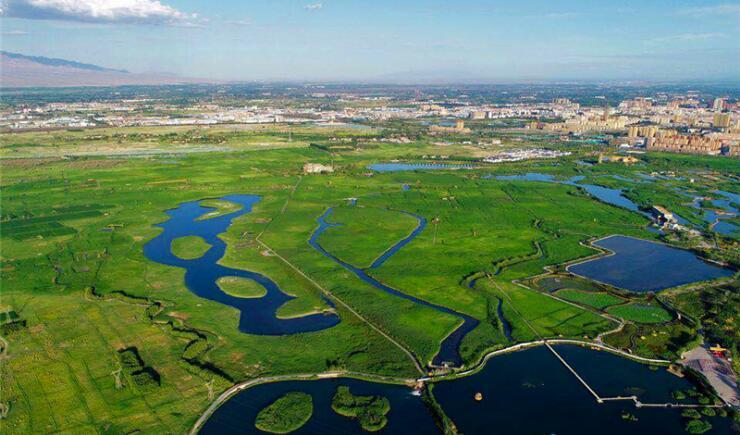 """为""""荷""""而来 这个盛夏 相约张掖 张掖国家湿地公园赏荷正当时"""