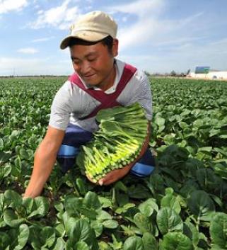 香港消费者青睐甘肃菜 6个月供应约800吨同比增长约160%
