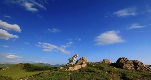 甘肃宕昌:天似巨型穹庐 地如嵌玉绿毯