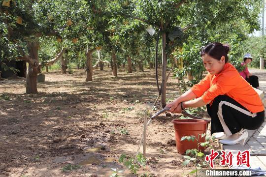 西峰多元化产业促脱贫:村民初尝甜头 盼生活巨变