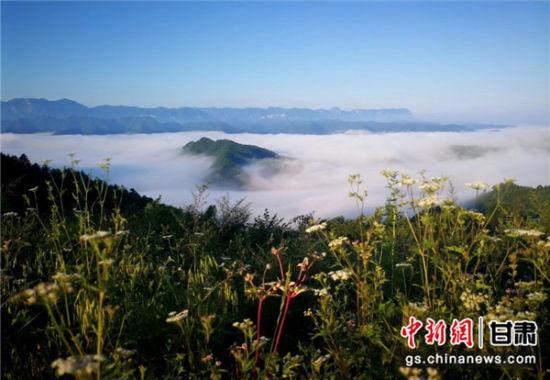 """甘肃两当现""""山岳景观"""":云海沉沉 似海非海"""