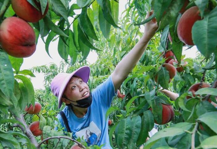 特色农业助农增收