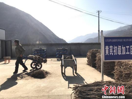 2019年1月29日,甘肃陇南市宕昌县哈达铺中药材加工厂内,当地农民加工药材。图为黄芪初级加工区。(资料图) 闫娇 摄