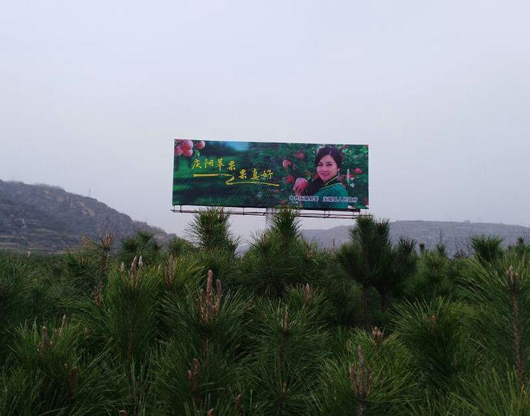 风从塬上来 甘肃籍影视演员田瑞代言庆阳苹果亮丽全国